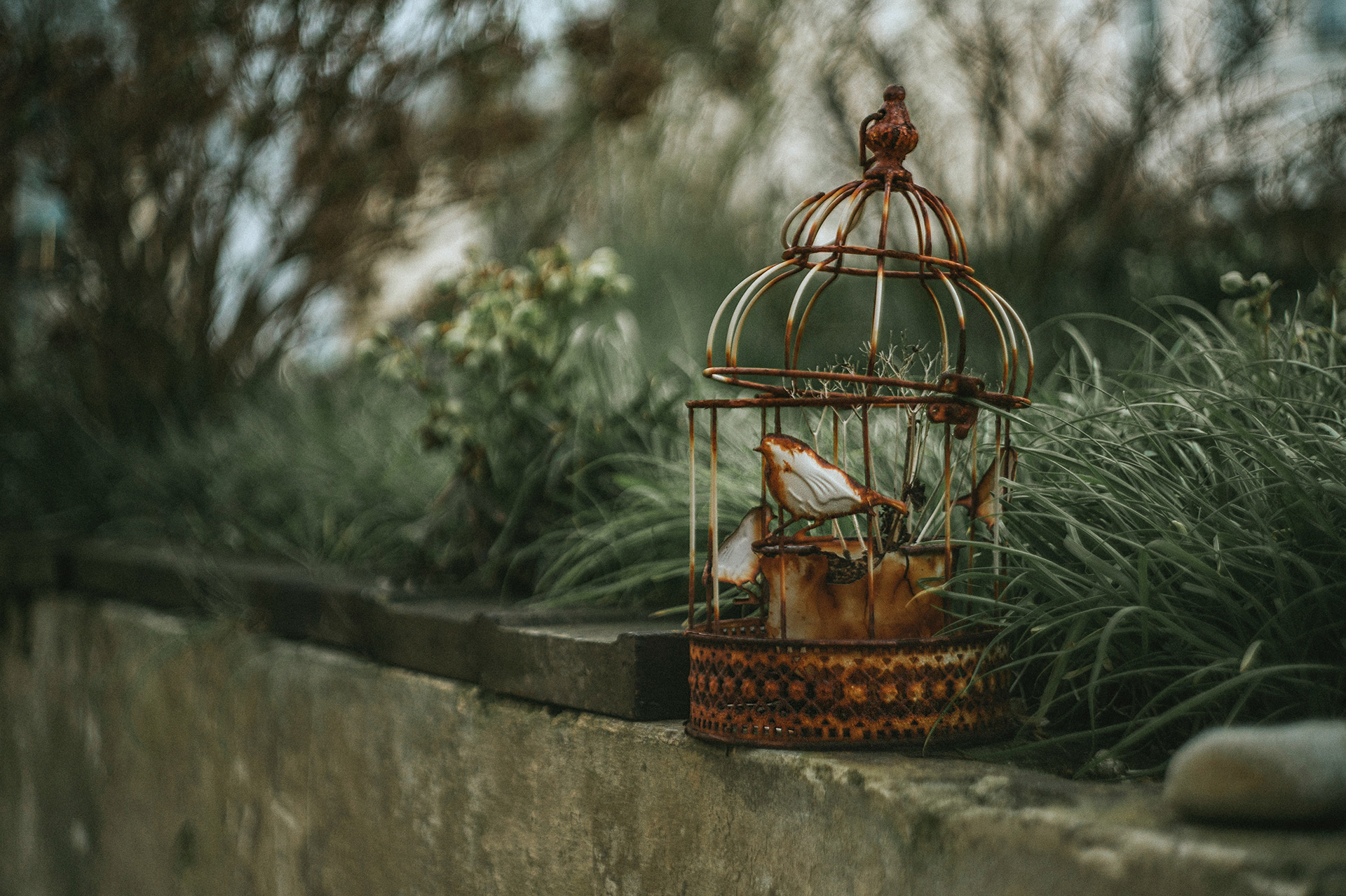 Oiseau captif